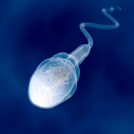Imagen investigamos para ti - esperma